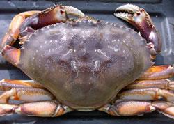 crab_photo